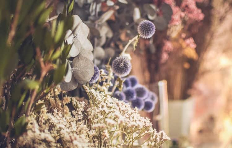 Photographie Floriane Celle - Les Fleurs séchées françaises - Les Fleurs Dupont