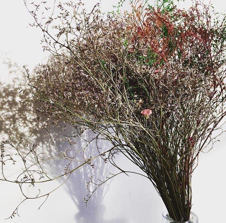 Fleur séchée décoration - Lattifolia